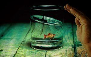 vaso-medio-lleno-con-pez-de-color-nadando