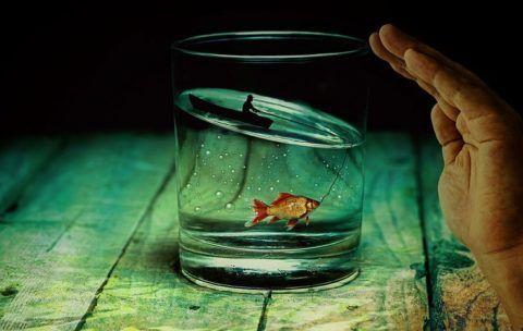Vaso-agua-con-pez